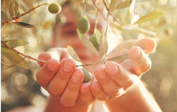 olives maroc cartier saada